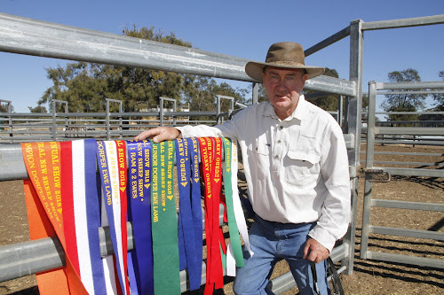 Mark Gett with 13 award ribbons won at recent major shows by the Gett family's Dorpers