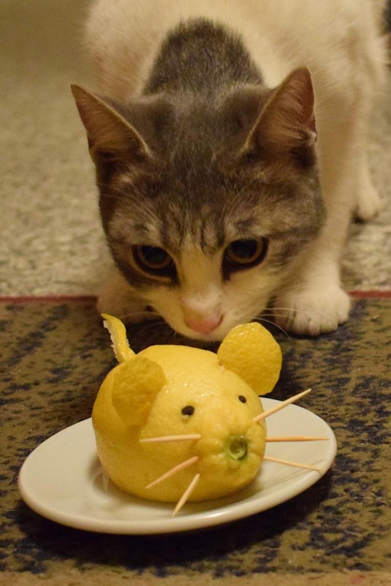 gatto e topo di -Giada-