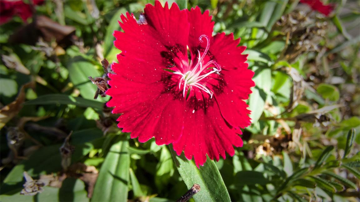 Sign Flower.jpg