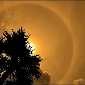 H A L O SUN by Tuty Ctramlah - Landscapes Sunsets & Sunrises