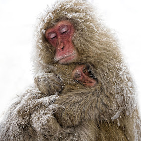 Mothers Love by Anne Young - Animals Other Mammals (  )