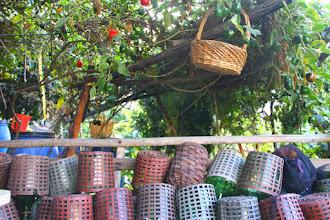 Photo: recuerdo de los pintatani's degustados en la región..