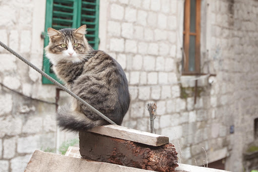 Kotor-kitty.jpg - A kitty in Kotor, Montenegro, a cat-friendly city.