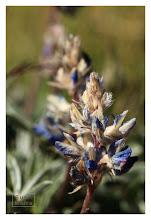Photo: Eastern Sierras-20120717-684