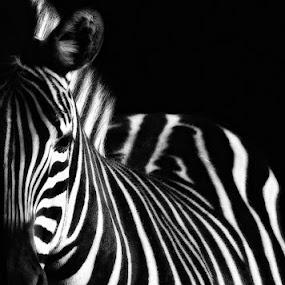 Prisoner by Uroš Florjančič - Animals Other