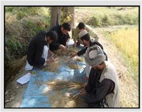 Photo: Saed Ahmed-Qulboraq village. [Photo by Ali Muhammad Ramzi]