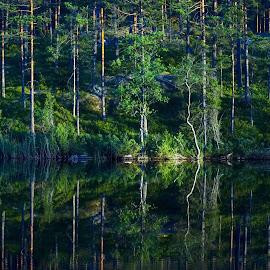 Mirror by Alf Winnaess - Uncategorized All Uncategorized