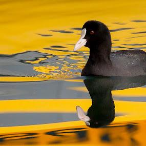 Reflections by Kristijan Matulić - Animals Birds