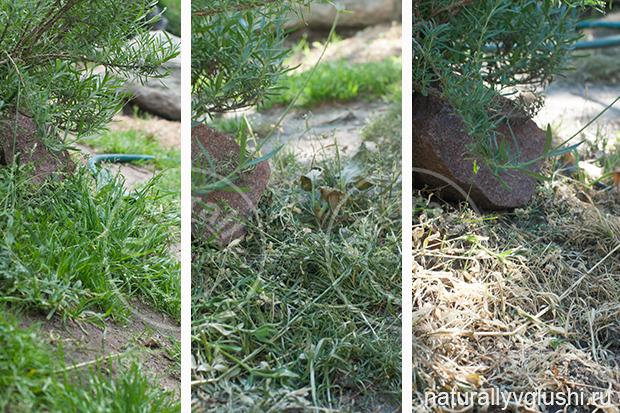 избавляемся от сорняков натурально | Блог Naturally в глуши