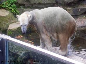 Photo: Hm, jetzt ein Bad ?