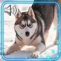 Husky Dogs HD Live Wallpaper icon