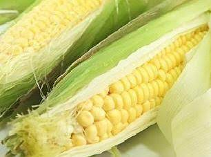 Fresh Corn Boiled On The Cob/ Jewel's Way. Recipe