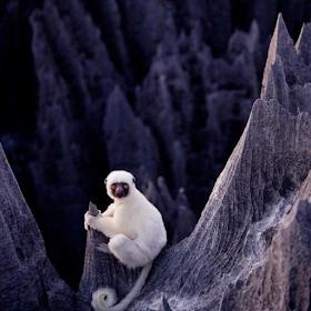 Обои Каменный лес Мадагаскара