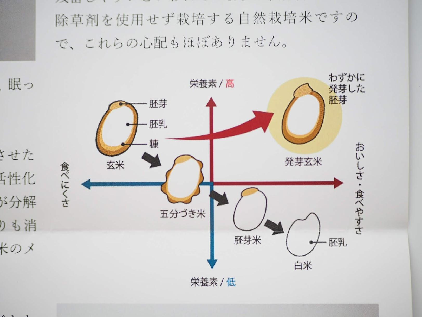 玄米・五分づき米・胚芽米・白米の違いを分かりやすい図で説明している