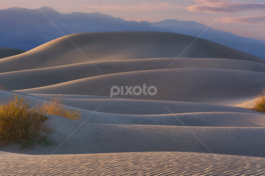 Mesquite Dunes by Phyllis Plotkin - Landscapes Deserts ( death valley national park, sand dunes, california, sunset, mesquite dunes )