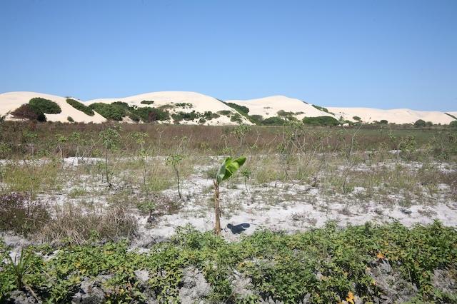 Photo: Parabolic dunes near Angoche