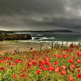 Storm approaching by Tony Walker - Landscapes Beaches ( poppies sea clouds storm cornwall beach )