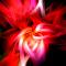 roseabstract.jpg