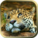 Animal Live Wallpapers icon