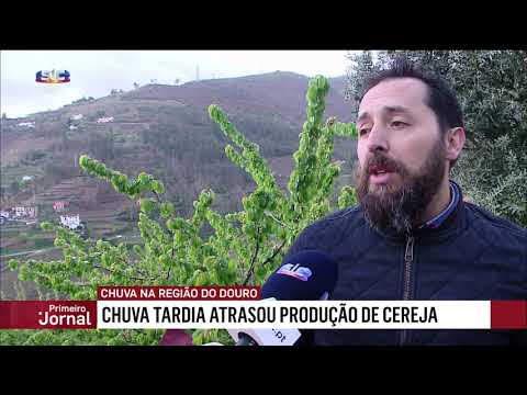 Chuva tardou na região do Douro, mas ainda vem a tempo