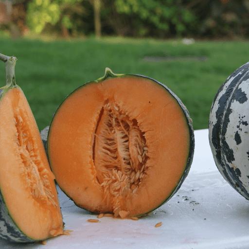 serre du molné melon de lunéville