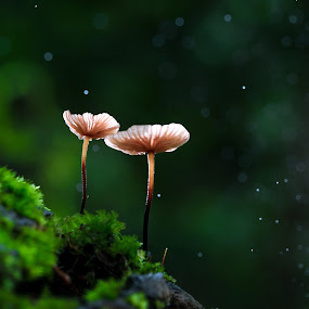 Together by Tuan Pham - Nature Up Close Mushrooms & Fungi ( macro, green, 100mm, vietnam, canon )