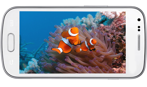 Nemo Fish HD LiveWallpaper