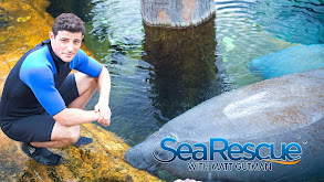 Sea Rescue With Matt Gutman thumbnail