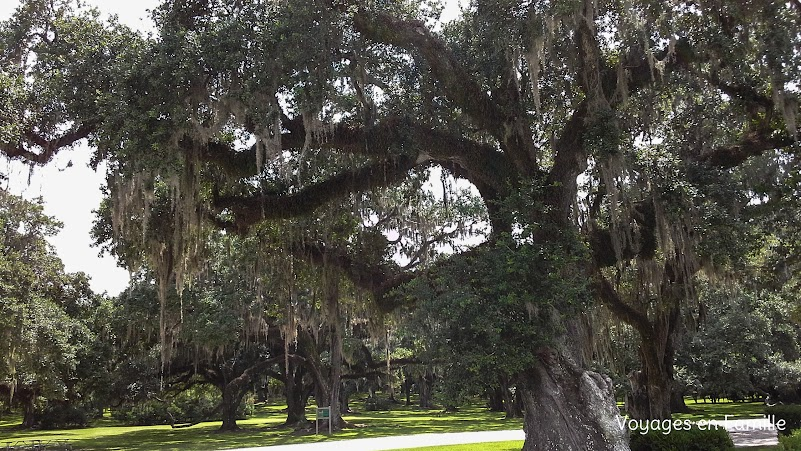 Avery Island, Jungle Gardens