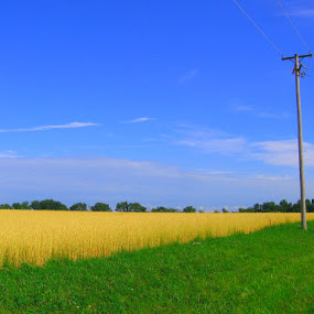 by Karen Carnahan - Landscapes Prairies, Meadows & Fields