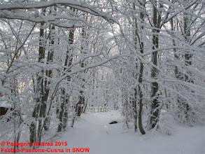 Photo: IMG_9899 ingresso sul 615