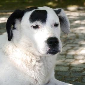 my street friend by Zulmira Relvas - Animals - Dogs Portraits (  )
