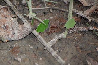 Photo: leaf cutter ants