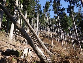倒木が多い急登