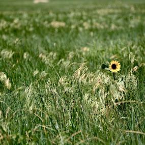 by Antonio Tavoletti - Nature Up Close Flowers - 2011-2013