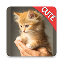 CUTE CATS Memory matching Game icon