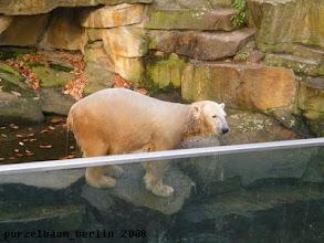 Photo: Knut im Sonnenschein vor dem Wassergraben ;-)