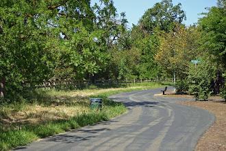 Photo: Putah Creek - Old North Fork - Mariposa Circle Access