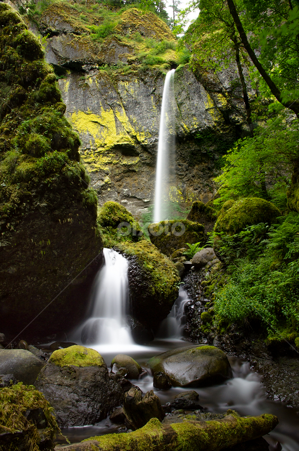 Elowah Falls II by Thomas Duffy - Landscapes Waterscapes ( water, oregon, waterfall, moss, trees, northwest, thomas duffy photography, columbia river gorge, rocks, elowah falls )