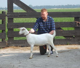 Photo: Rubriek 1: witte lammeren geboren in maart en april 2014.  1e. Sanne.