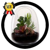 Terrarium Making Android APK Download Free By Secondhiday