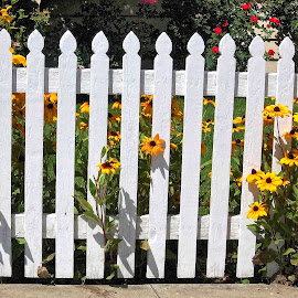 Picket fence by Gaylord Mink - Buildings & Architecture Architectural Detail ( fence, plants, flowers, pickets )