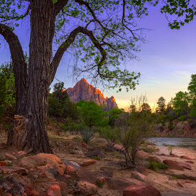 The Watchman by Brian Adamson - Landscapes Mountains & Hills ( mountain, watchman, trees, zion, river )