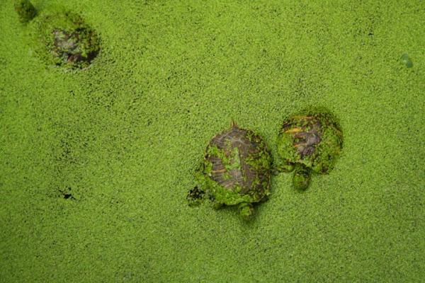 Las Tortugas di Pandora17