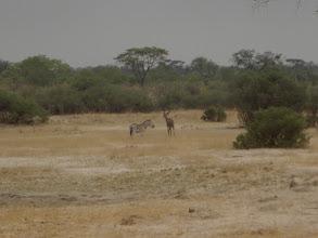 Photo: A zebra and a kudu