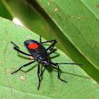 Bug (nymph)