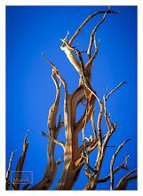 Photo: Eastern Sierras-20120715-266