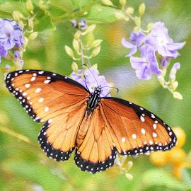Queen Butterfly by Dawn Hoehn Hagler - Digital Art Animals ( reid park zoo, tucson, arizona, butterfly, insect, queen butterfly, photoshop, zoo, oil paint, digital art )