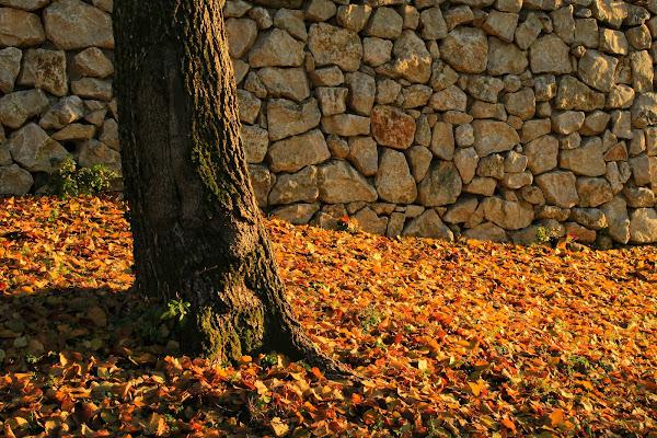 colori d'autunno di elena_papale