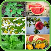 Plantas y frutas medicinales gratis APK